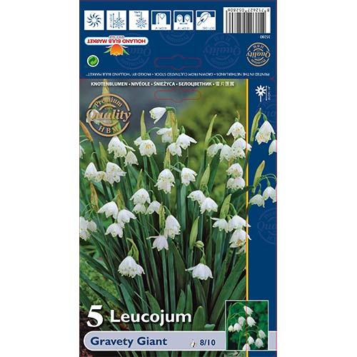 Biely kvet Gravety Giant изображение 1 артикул 70222