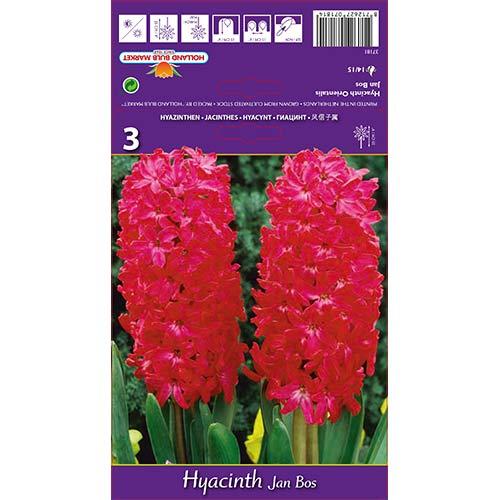 Hyacint Jan Bos изображение 1 артикул 67596