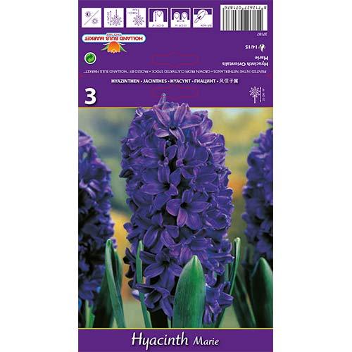 Hyacint Marie изображение 1 артикул 67588