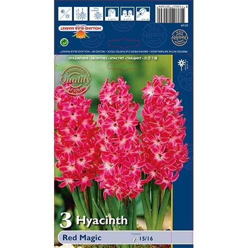 Hyacint Red Magic изображение 1 артикул 67593