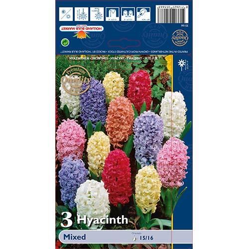Hyacint východný, mix изображение 1 артикул 68057