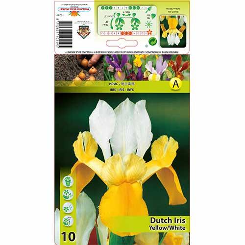 Kosatec holandský White-Yellow изображение 1 артикул 68127