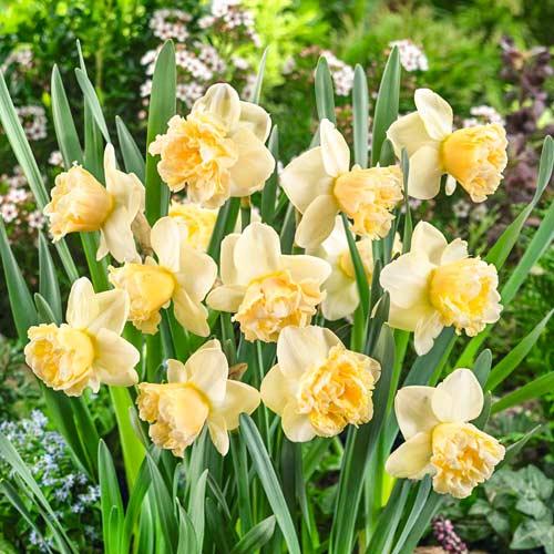 Narcis Art Design изображение 1 артикул 67410