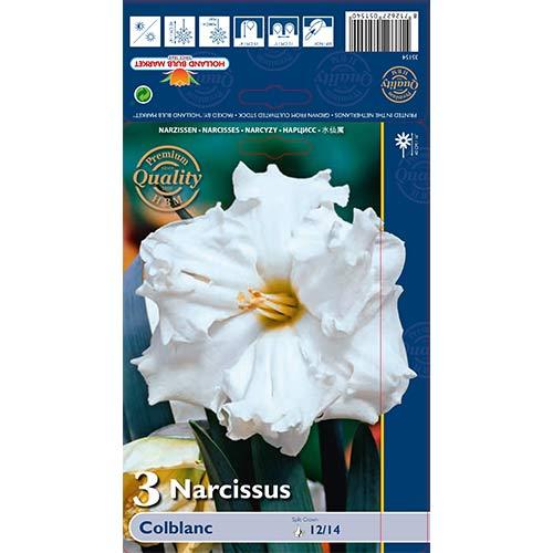 Narcis Colblanc изображение 1 артикул 67648