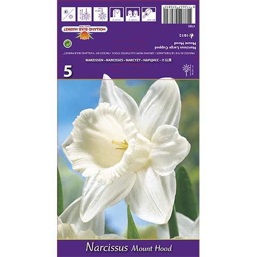 Narcis Mount Hood изображение 1 артикул 70214