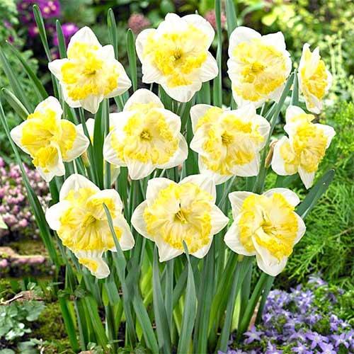 Narcis Printal изображение 1 артикул 67657