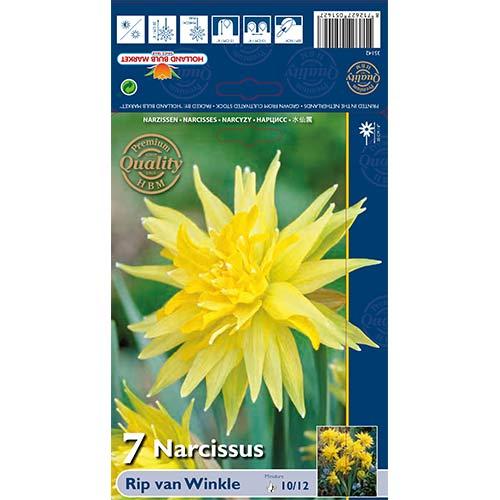 Narcis Rip van Winkle изображение 1 артикул 67660