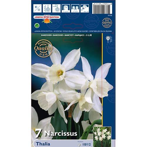 Narcis Thalia изображение 1 артикул 70236
