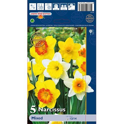 Narcis trubicovitý,mix изображение 1 артикул 67665
