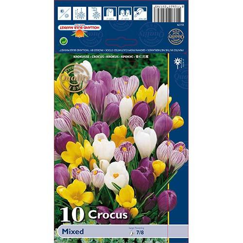 Šafran veľkokvetý, mix изображение 1 артикул 68015