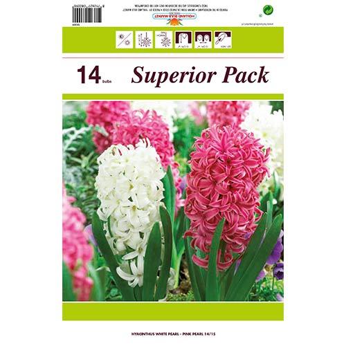 Super ponuka! Sada hyacintov so 14 cibuliek изображение 1 артикул 67550