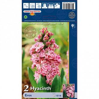 Hyacint Double Eros изображение 8