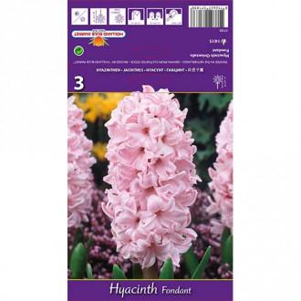 Hyacint Fondant изображение 8