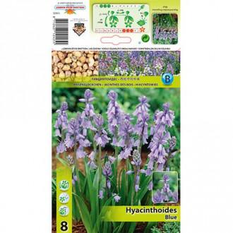 Hyacintovec Blue изображение 1