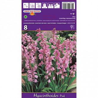 Hyacintovec Pink изображение 1