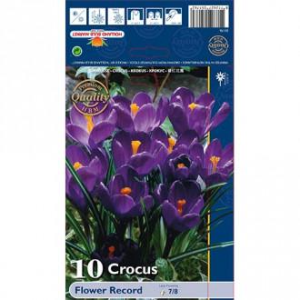 Šafran Flower Record изображение 7