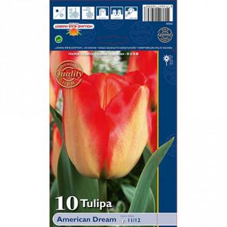 Tulipán American Dream изображение 3