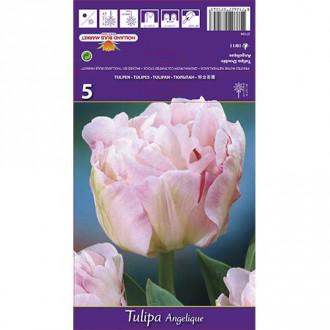 Tulipán Angelique изображение 5