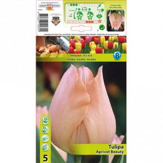 Tulipán Apricot Beauty изображение 8