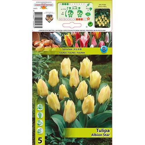 Tulipán Albion Star изображение 1 артикул 67450