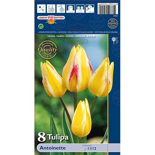 Tulipán Antoinette изображение 1 артикул 70256