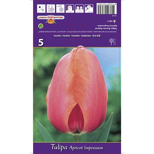 Tulipán Apricot Impression изображение 1 артикул 67687