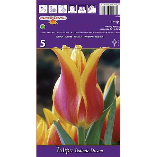 Tulipán Ballade Dream изображение 1 артикул 67477