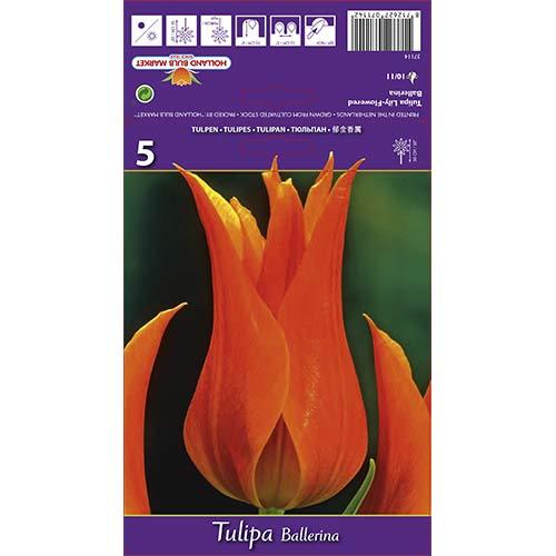 Tulipán Ballerina изображение 1 артикул 67754