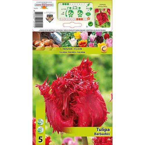 Tulipán Barbados изображение 1 артикул 67693