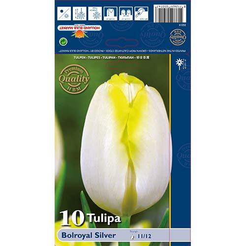 Tulipán Bolroyal Silver изображение 1 артикул 67706