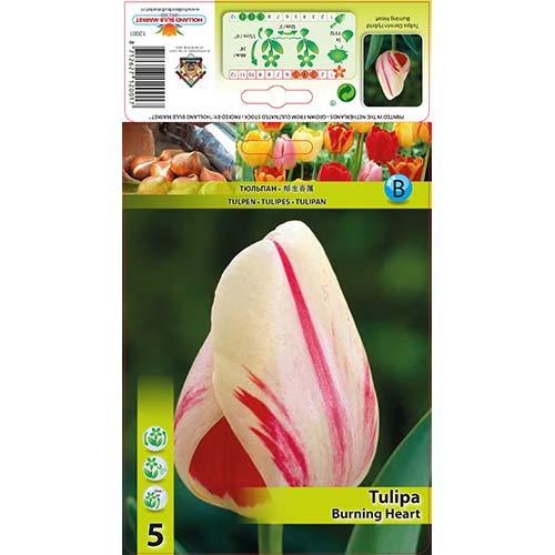 Tulipán Burning Heart изображение 1 артикул 70292