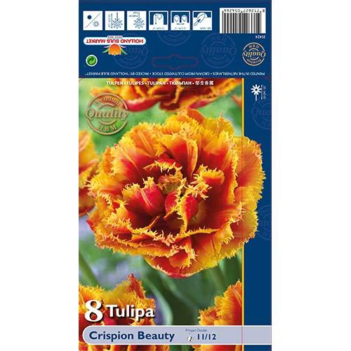 Tulipán Crispion Beauty изображение 1 артикул 68027