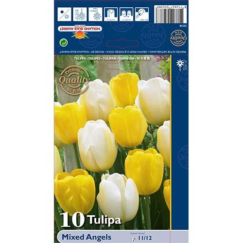 Tulipán Darwin Angels, mix изображение 1 артикул 70267