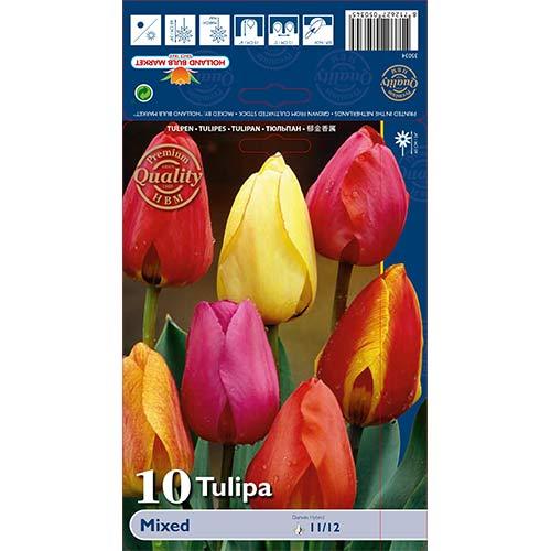 Tulipán Darwin, mix изображение 1 артикул 67878