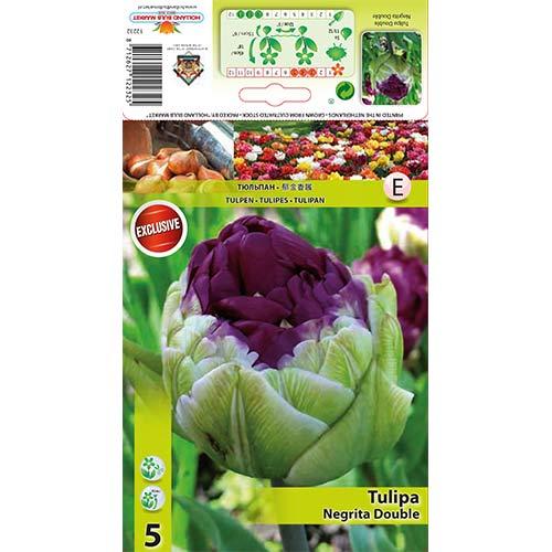 Tulipán Double Negrita изображение 1 артикул 67779