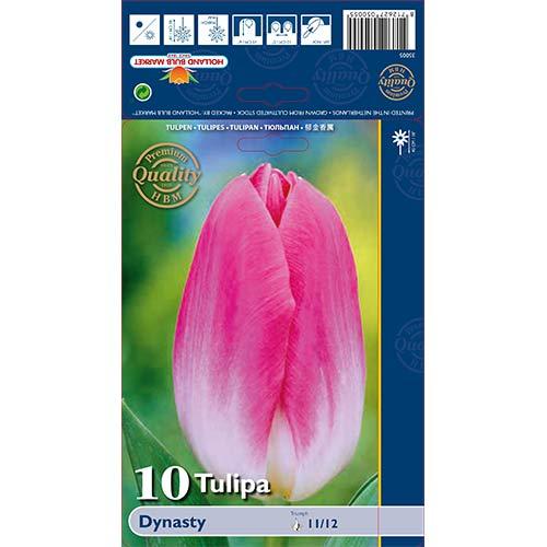 Tulipán Dynasty изображение 1 артикул 68034