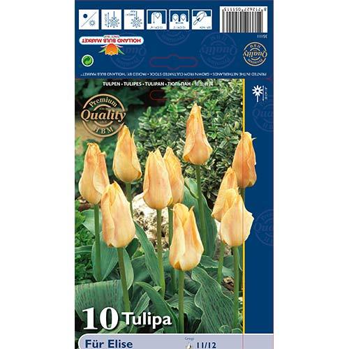 Tulipán Fur Elise изображение 1 артикул 70265