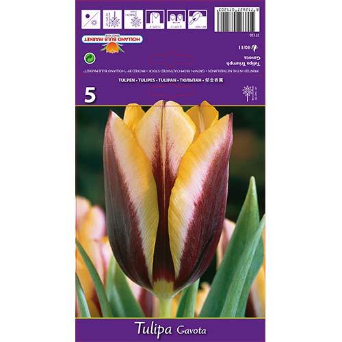 Tulipán Gavota изображение 1 артикул 67840