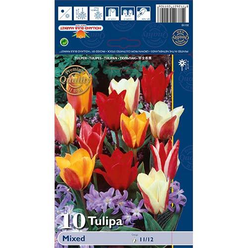 Tulipán Greigii, mix изображение 1 артикул 67872