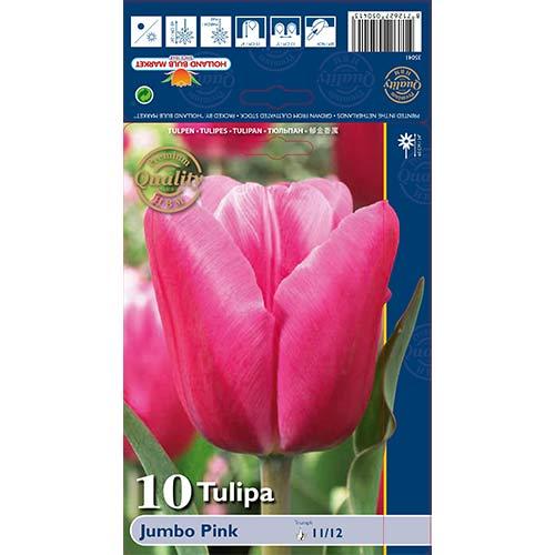 Tulipán Jumbo Pink изображение 1 артикул 67726