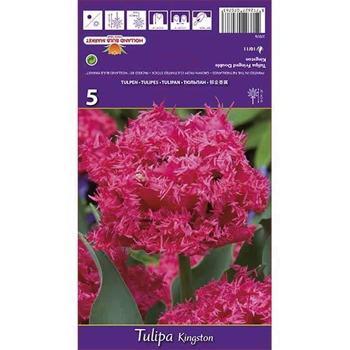 Tulipán Kingston изображение 1 артикул 67696