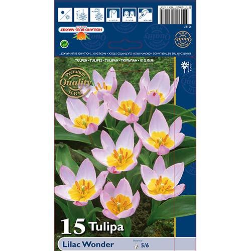 Tulipán Lilac Wonder изображение 1 артикул 67751