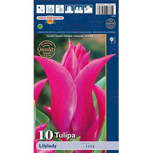 Tulipán Lilylady изображение 1 артикул 67760