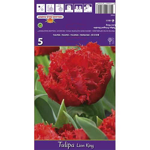 Tulipán Lion King изображение 1 артикул 67697