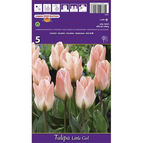 Tulipán Little Girl изображение 1 артикул 68108