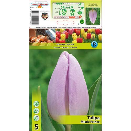 Tulipán Mistic Prince изображение 1 артикул 68084