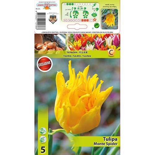 Tulipán Monte Spider изображение 1 артикул 67776