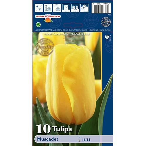 Tulipán Muscadet изображение 1 артикул 68043