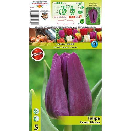 Tulipán Passio Glossy изображение 1 артикул 67786