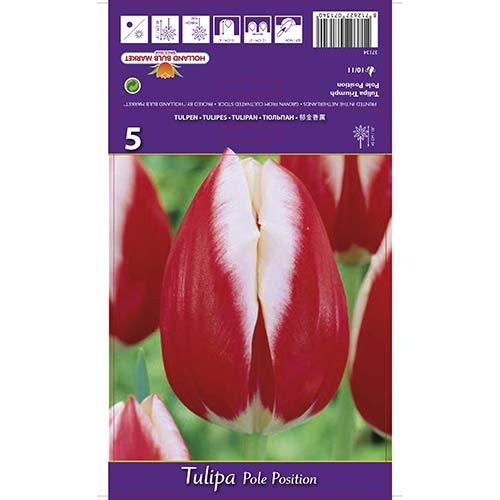 Tulipán Pole Position изображение 1 артикул 70219